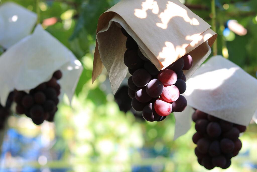 今年も秋がやってきた♡葡萄色コスメで旬なトレンド感をGET!の画像