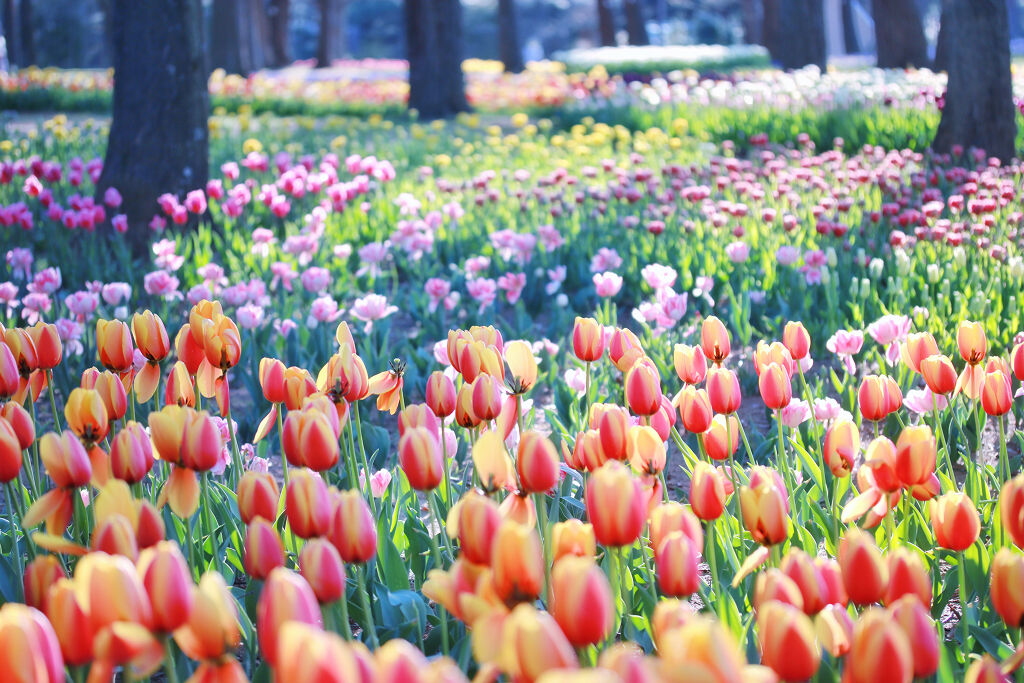 【春メイク♡】パステルカラーのアイシャドウで、誰よりも春を楽しみましょう♡の画像