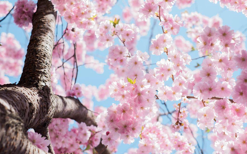 2/14発売!あの大人気韓国コスメブランドから超かわいいクッションファンデが出たよ✨の画像