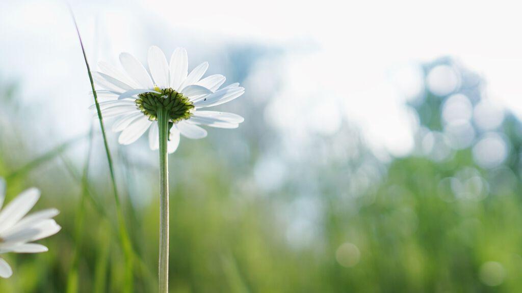 花粉対策できてる?スキンケアでバリア機能高めよう!の画像