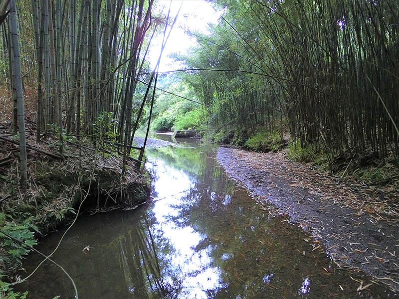 牧場を下ると静かな川が流れている