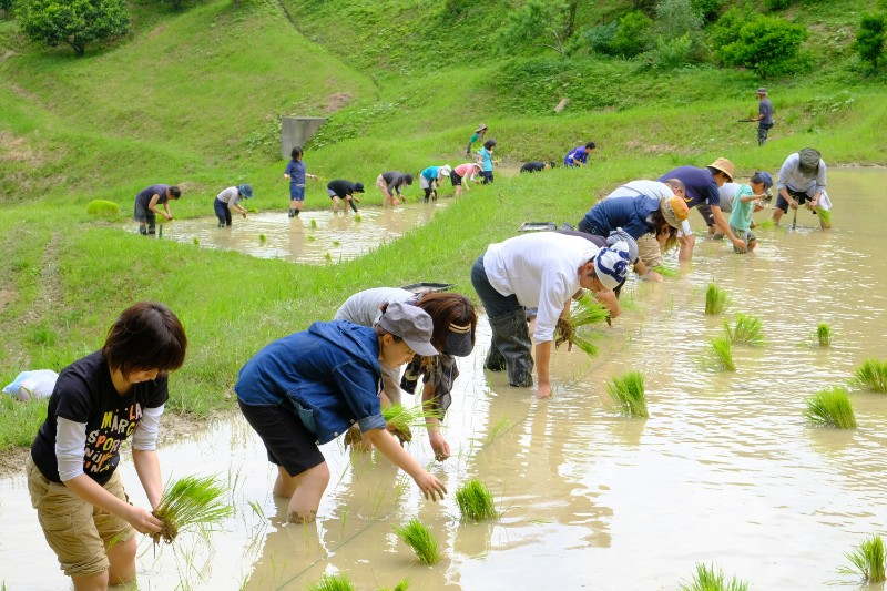 毎年、GW後から梅雨前にかけて行われる田植え。ここの棚田は天水だけで水をまかなう。