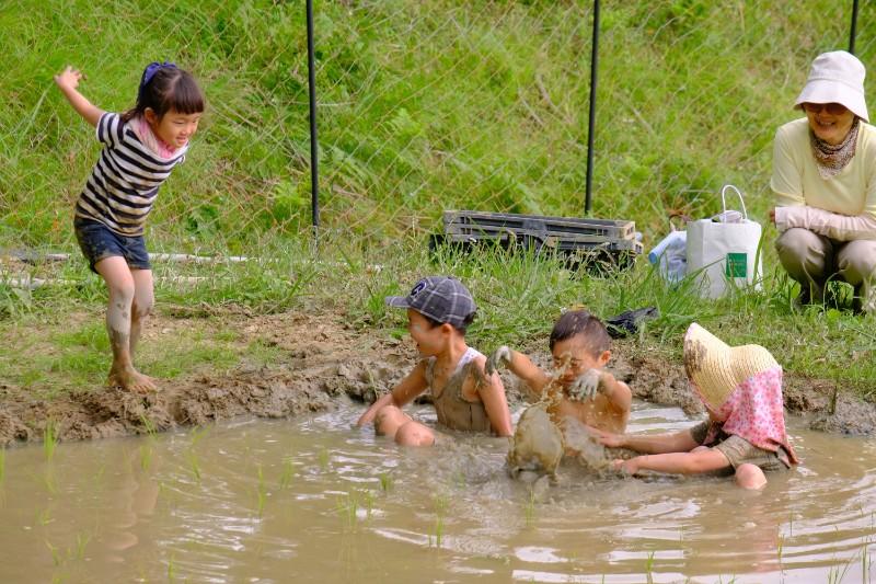 子供たちは田植えに飽きると泥んこ遊び。いつまでも残したい風景。