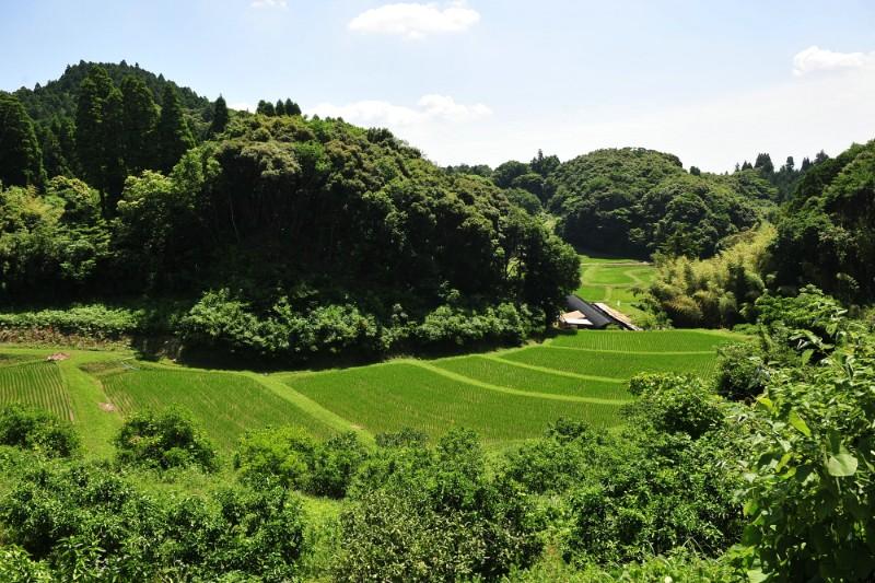 梅雨が明け、稲がぐんぐん育つ初夏の棚田。生命力があふれ出す。