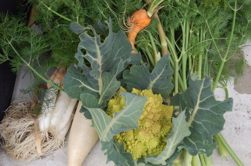 「色んな野菜を少しずつ」は家庭菜園の理想形