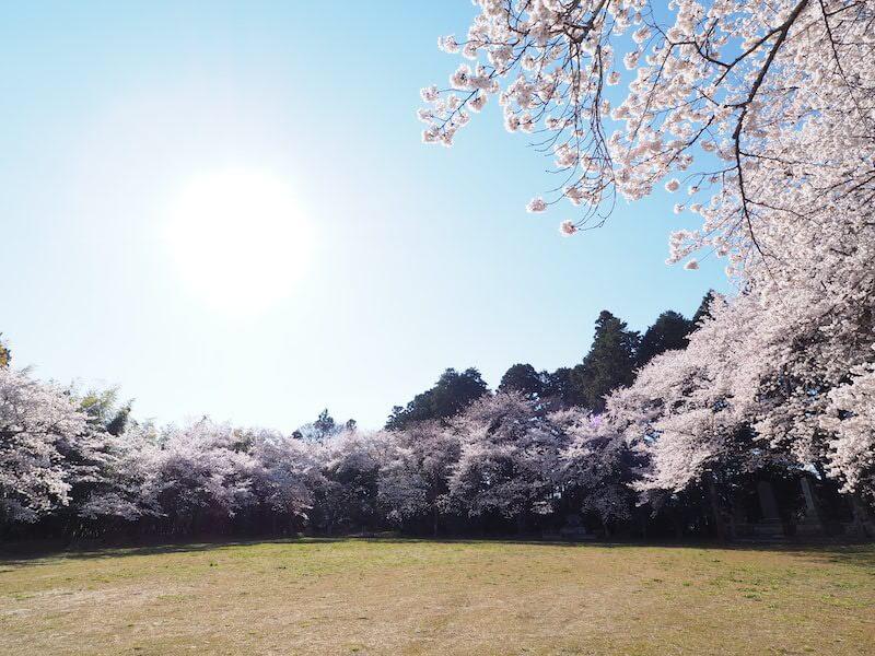 小高神社を彩る満開の桜