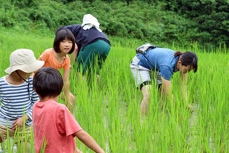 大人は草とり、子供は虫とりに夢中