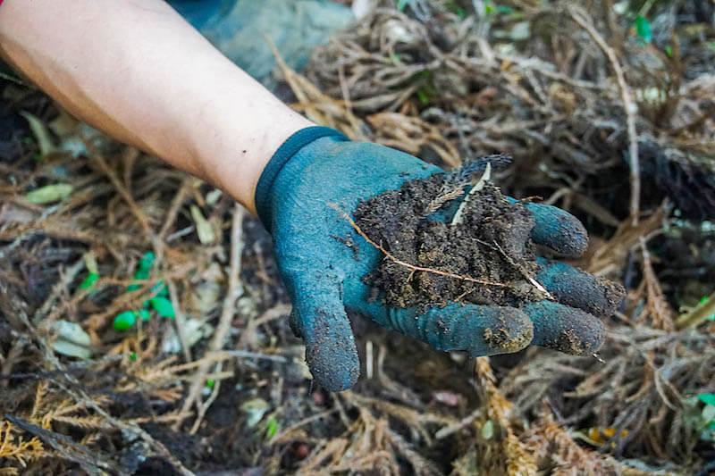 黒くてフカフカの土。森が肥沃な土壌を作り出します。
