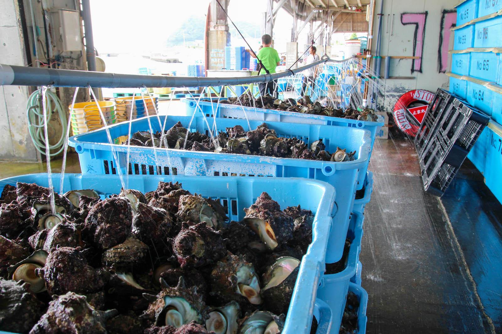 天津漁港の競り場の片隅で出荷を待つサザエのカゴ