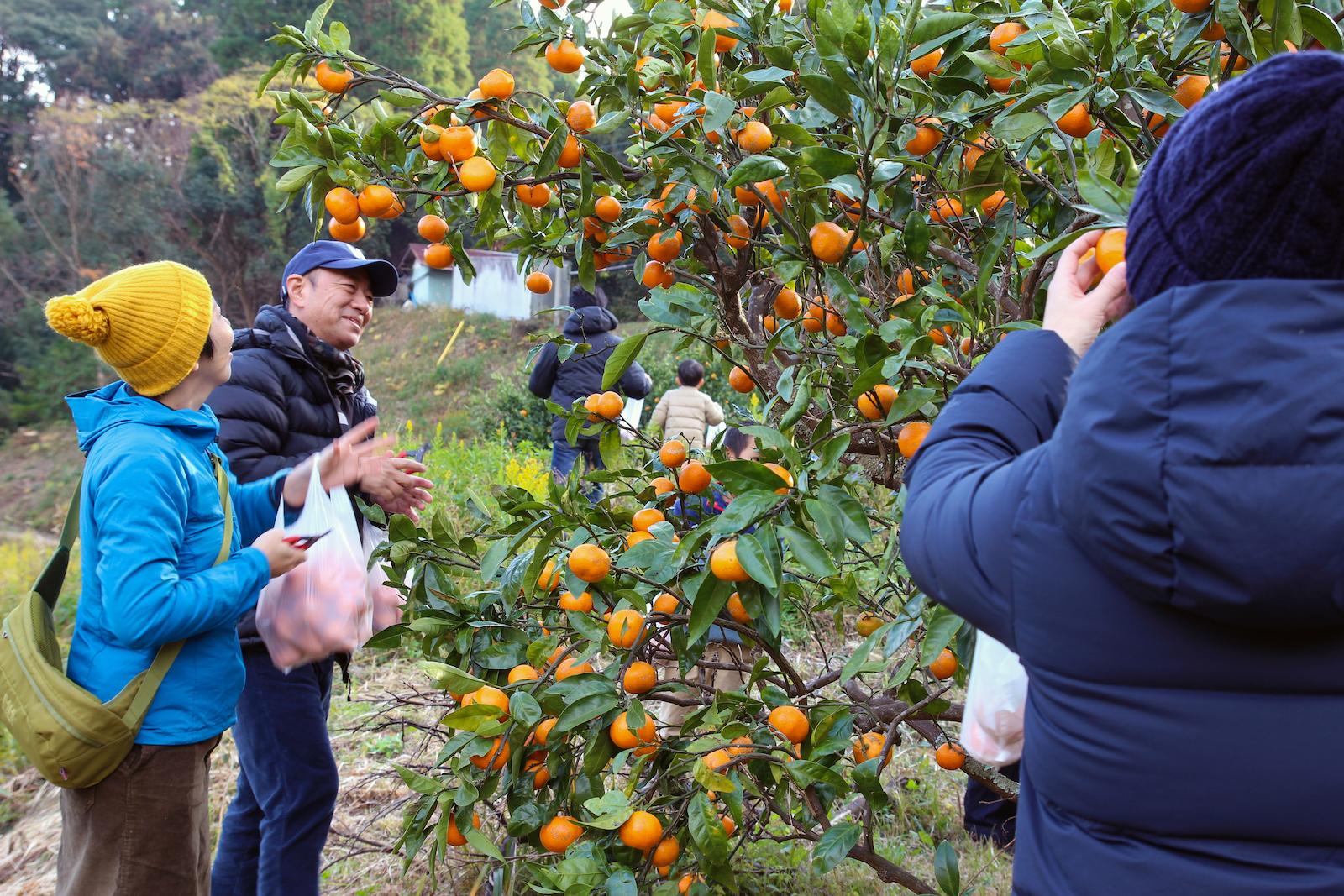 お土産は自身で摘んだ野性味あふれる温州みかん。豊かな里山の実り
