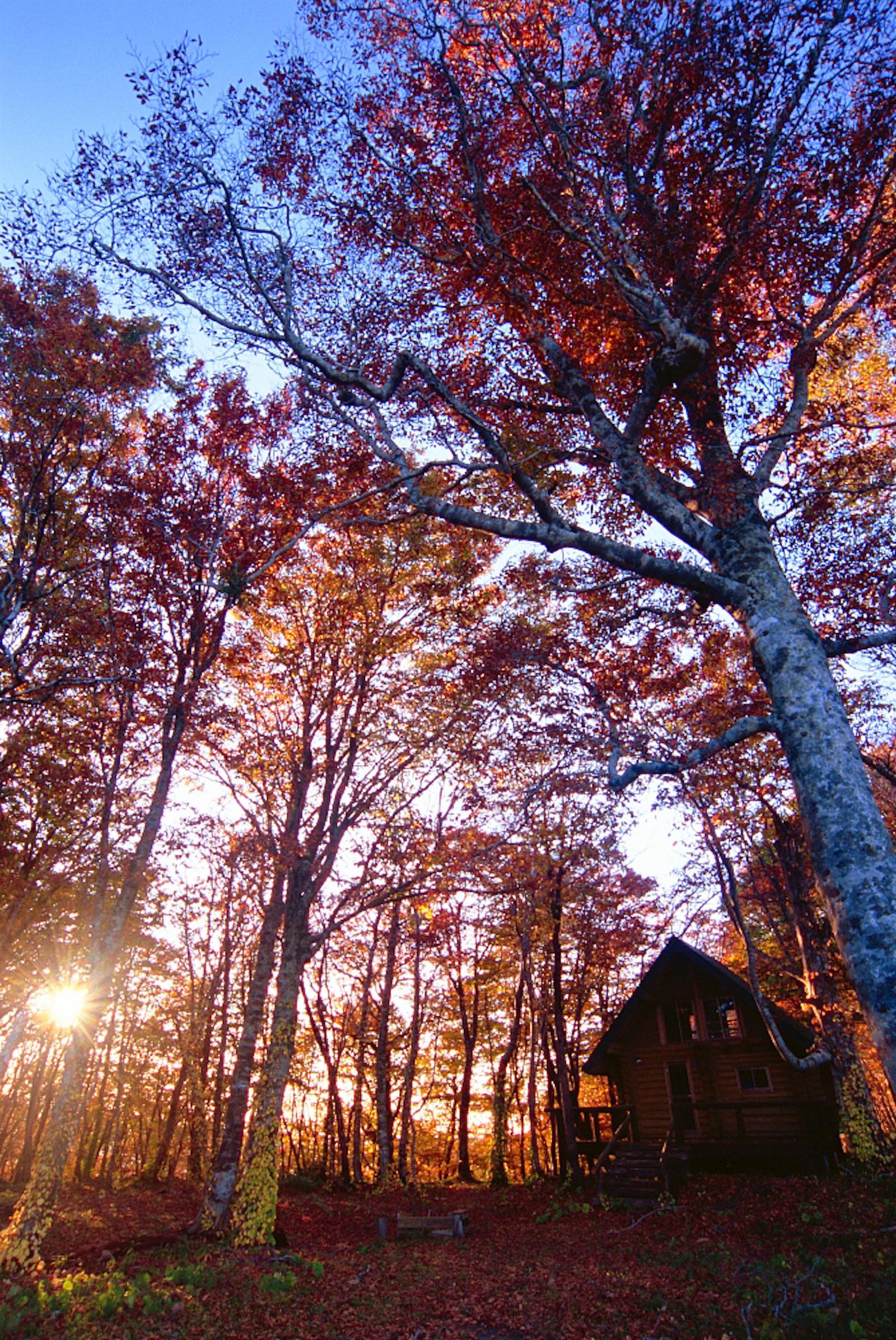 秋の「奧尻21世紀復興の森」