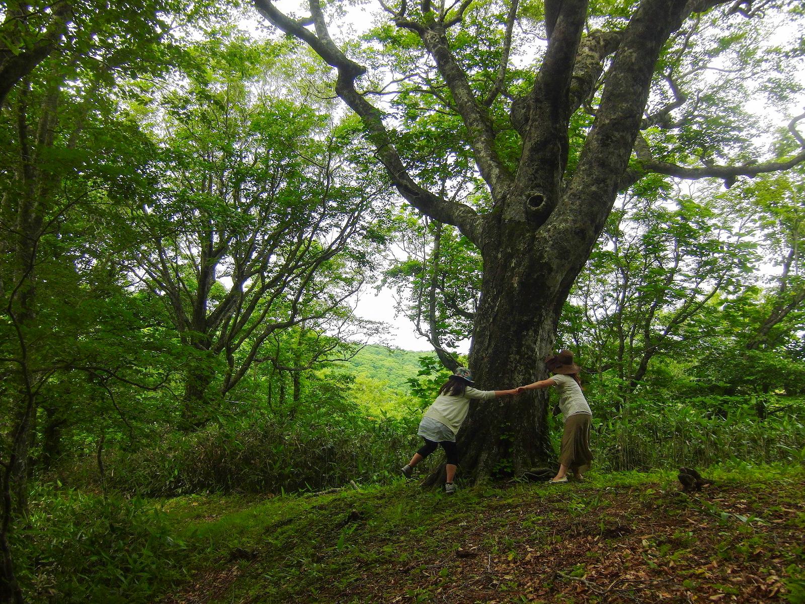 マザーツリーを抱きしめる人たち