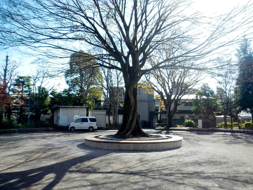 公園の中央にある木の周りにつくられたサークルベンチ