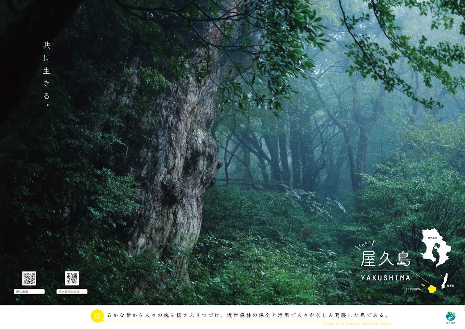 屋久島のシンボル的存在の縄文杉。屋久島町の観光ポスター。