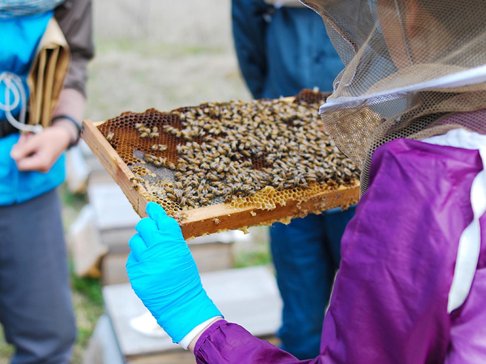 丁寧に世話をすれば、おとなしい蜂に育つ