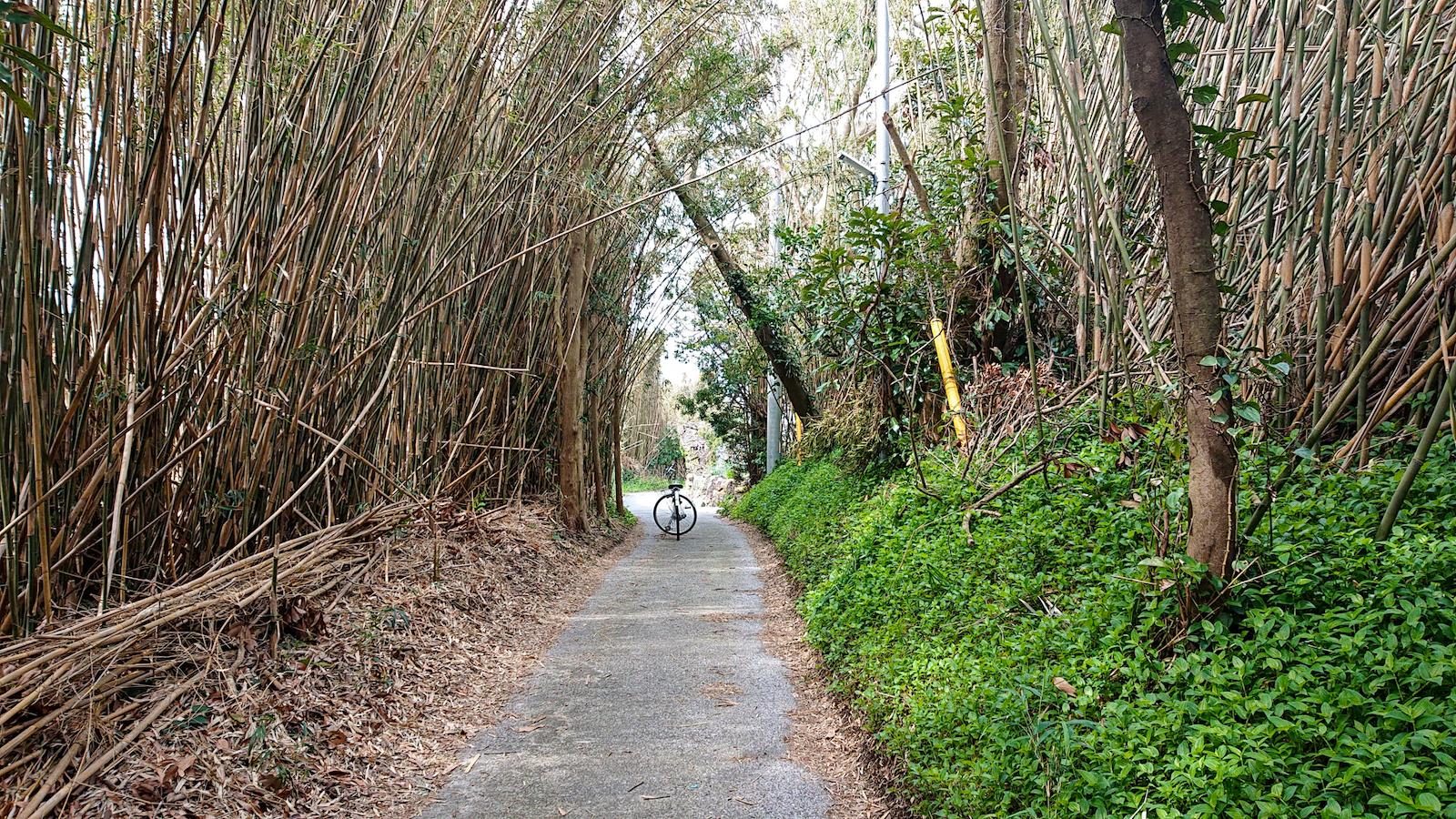 風を押さえ、日陰を作ってくれる竹ですが、道の手入れはとても手間がかかります