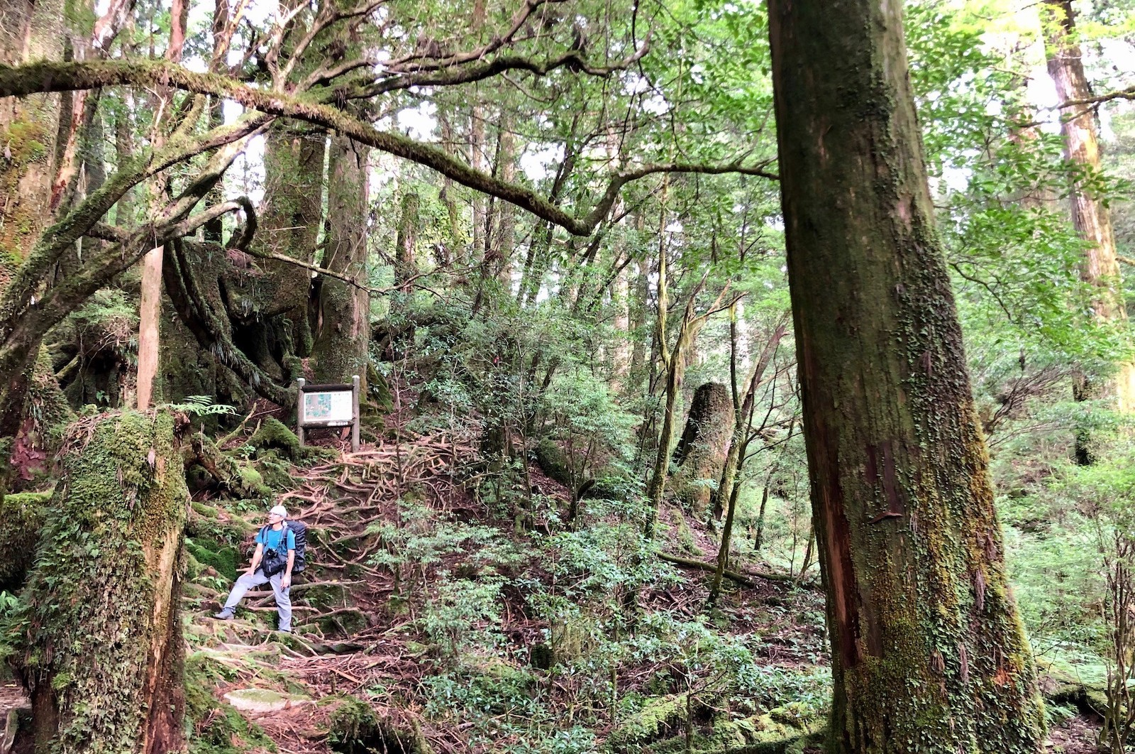 ガイドをしながら、自身の探求心も刺激される森の中