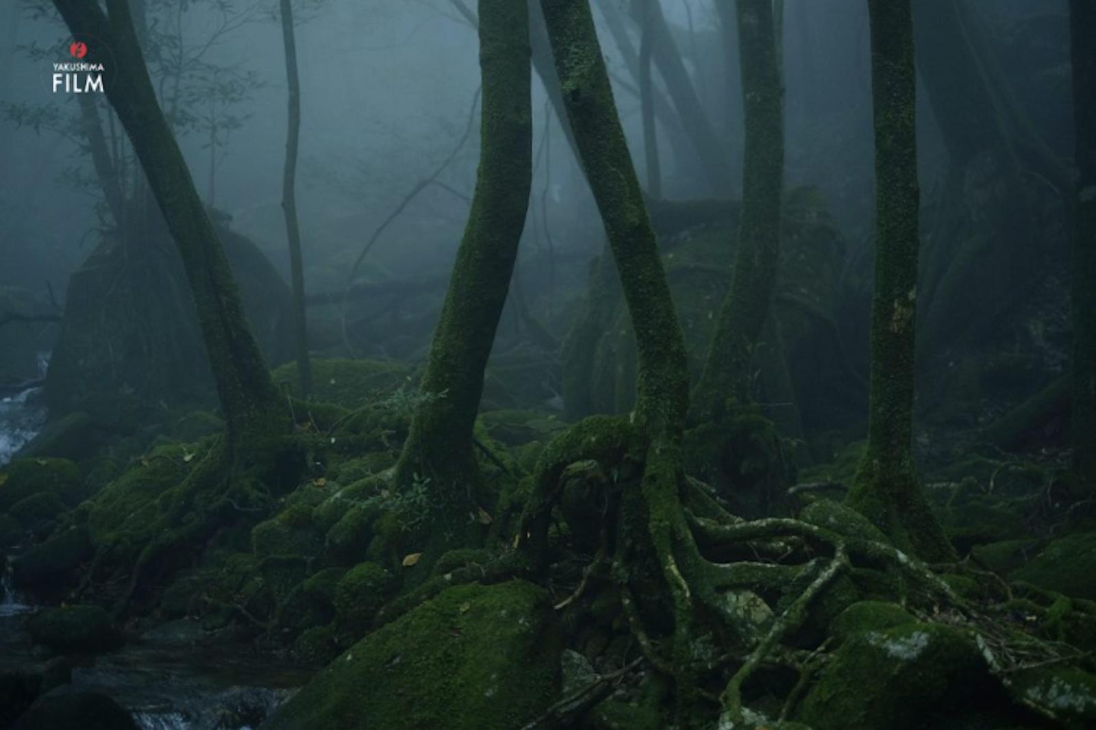 「靄(もや)」 皆川さん撮影