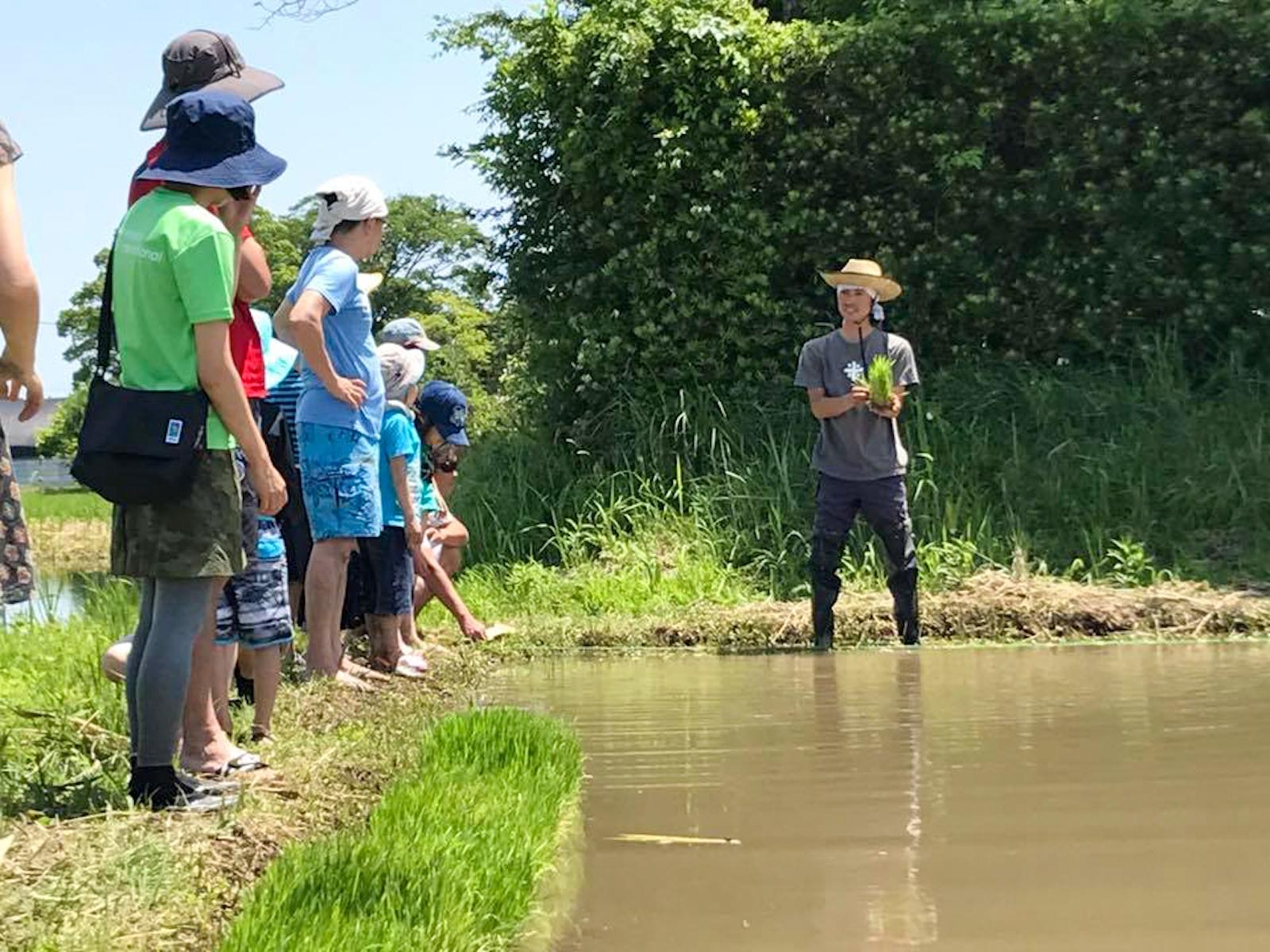 体験で田んぼを訪れた人たちに田植えのレクチャーを行なう鶴渕さん(写真右)。