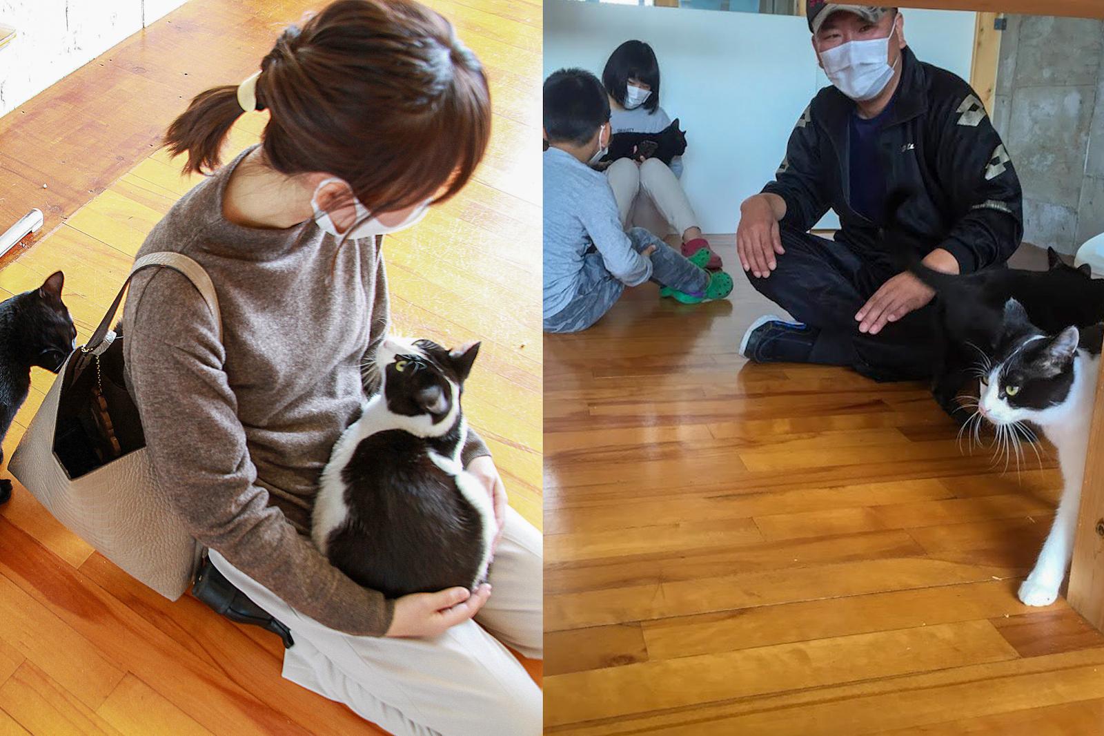 譲渡会は日曜の10時から16時まで(平日は要予約)。猫とのふれあい目的のみでもOK