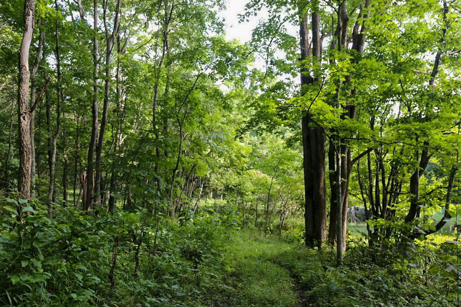 厚真町は面積の約7割が森林。(写真提供:メディア「Through Me」)