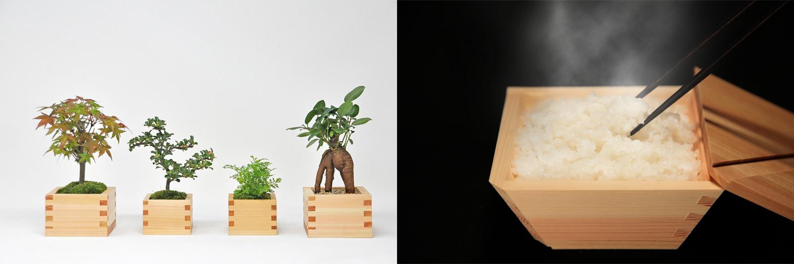 左 鉢植えに仕立てた「マスグリーン」、右 21年10月に一般販売が予定されている「コビツ」