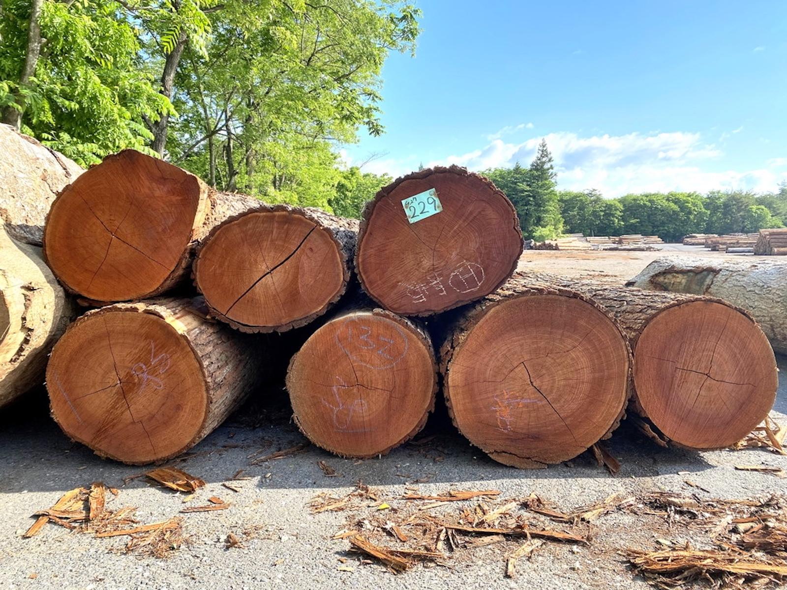 冬季に伐採され乾燥を待つ原木達