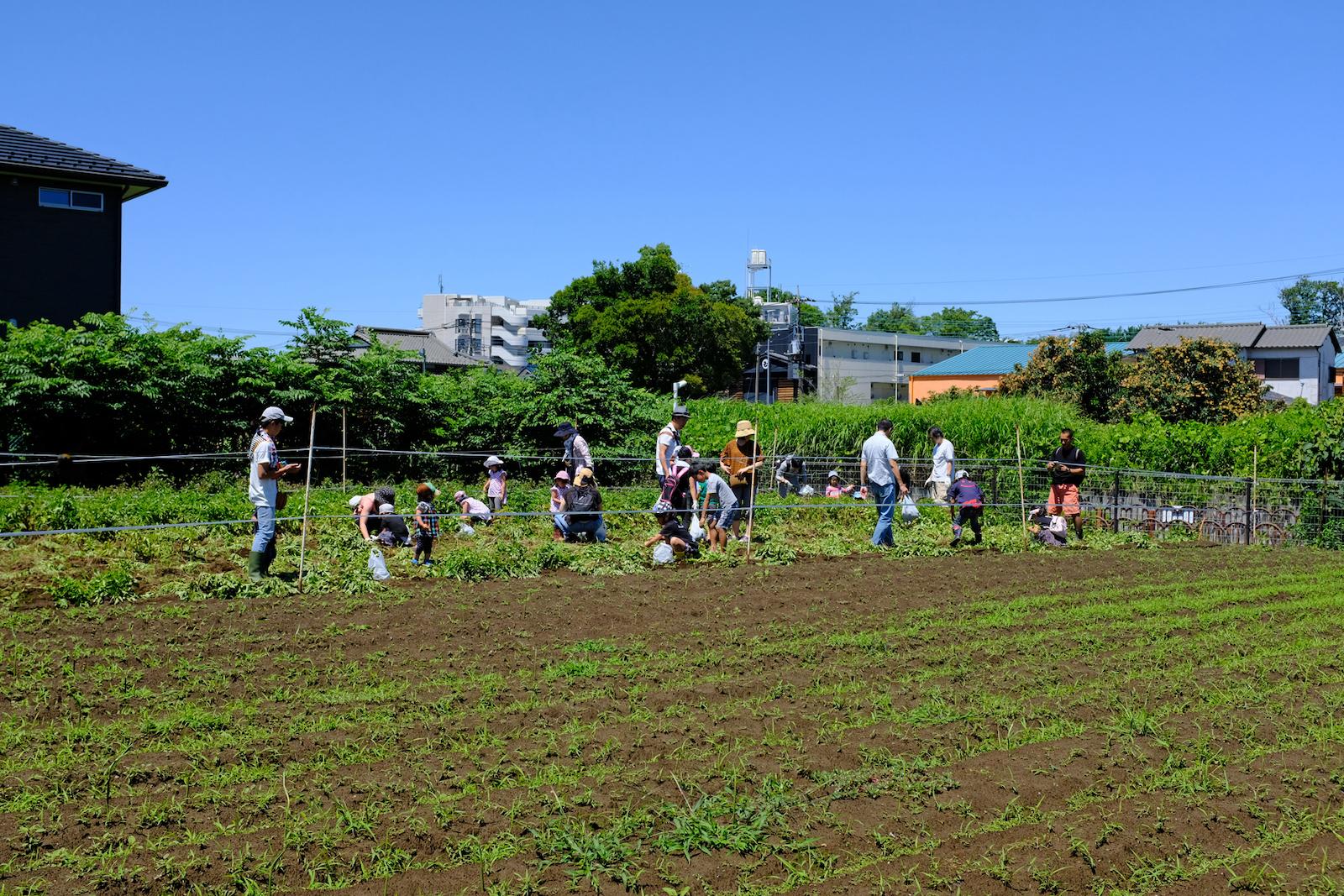 土とふれあえる畑の周辺は民家が立ち並ぶ