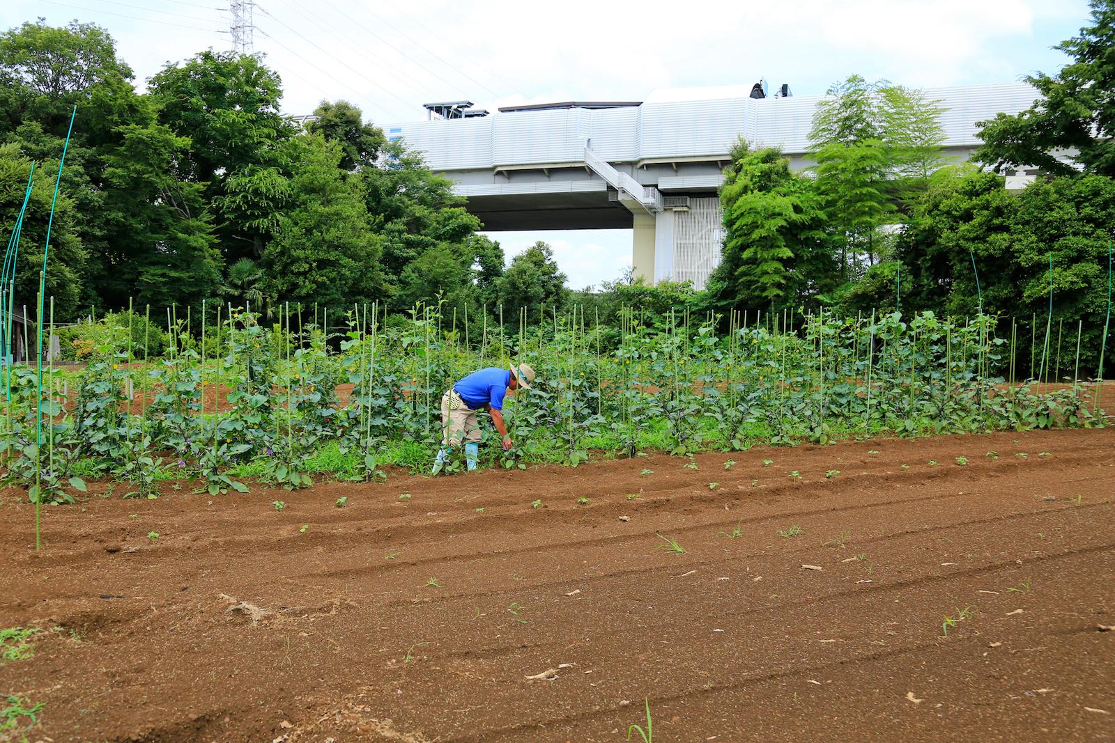 畑の後ろに外環自動車道がある都市農家らしい風景