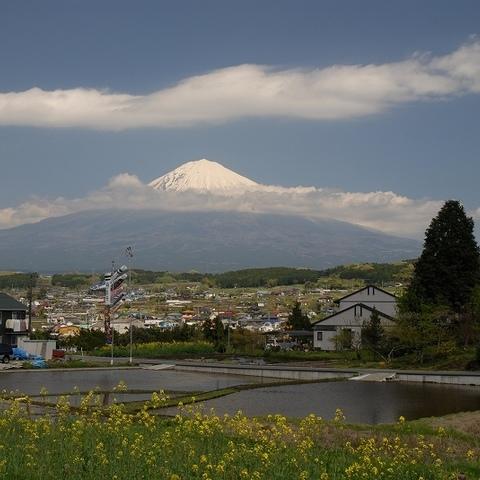 柚野 こいのぼり (富士山ビューポイント)のサムネイル