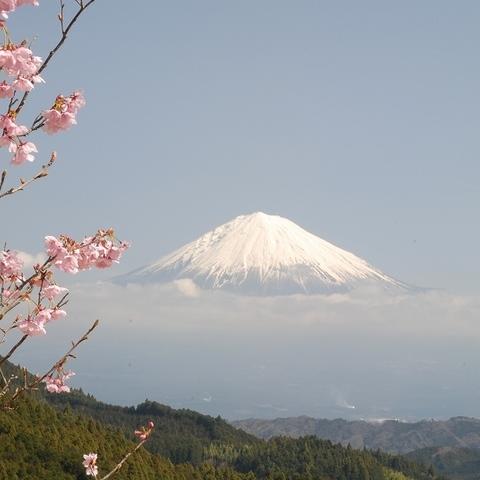 宍原さくら(富士山ビューポイント)のサムネイル