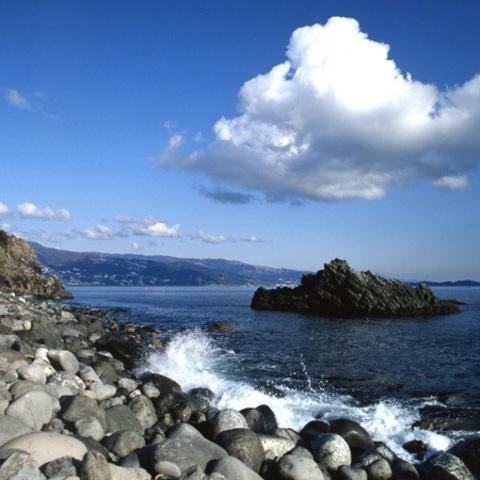 網代海岸のサムネイル