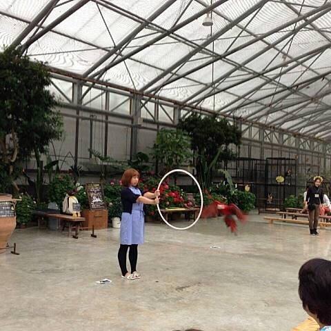 掛川花鳥園ハート型フレームのサムネイル