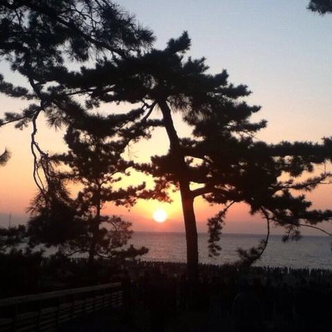 三保の松原のサムネイル