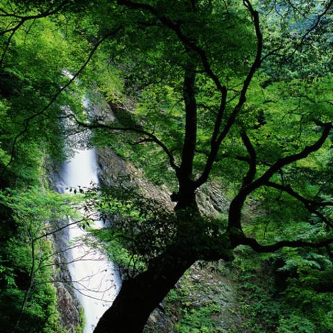 宇嶺ノ滝 のサムネイル