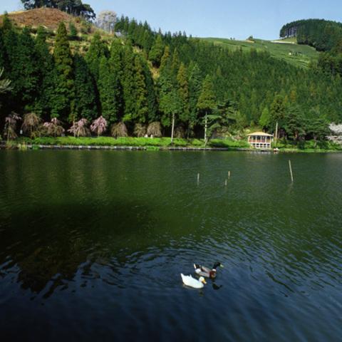野守の池のサムネイル