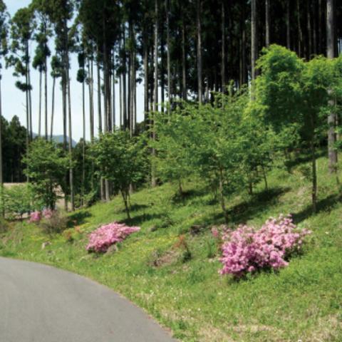 高山・市民の森のサムネイル