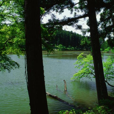 新宮池のサムネイル