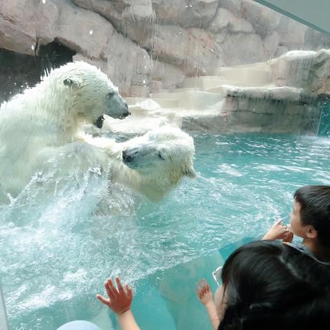日本平動物園のサムネイル