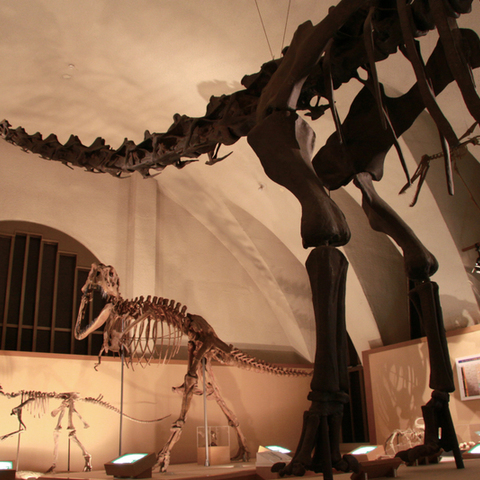 恐竜のはくぶつかん 東海大学自然史博物館のサムネイル