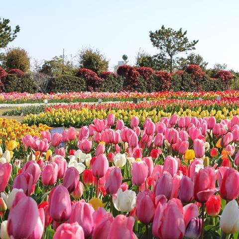 県営吉田公園のサムネイル