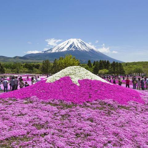 富士本栖湖リゾートのサムネイル