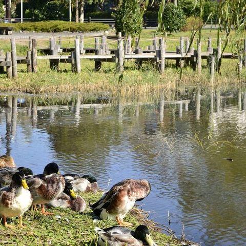 門池公園のサムネイル