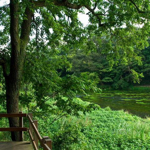柿田川公園のサムネイル