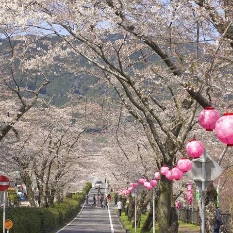 家山桜トンネル