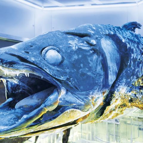 沼津港深海水族館 シーラカンス・ミュージアムのサムネイル