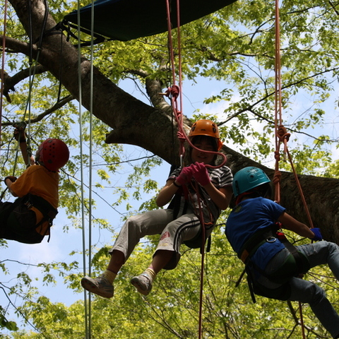 Мother Tree ふぉーらむ 木登りキャプテン まるやまのサムネイル