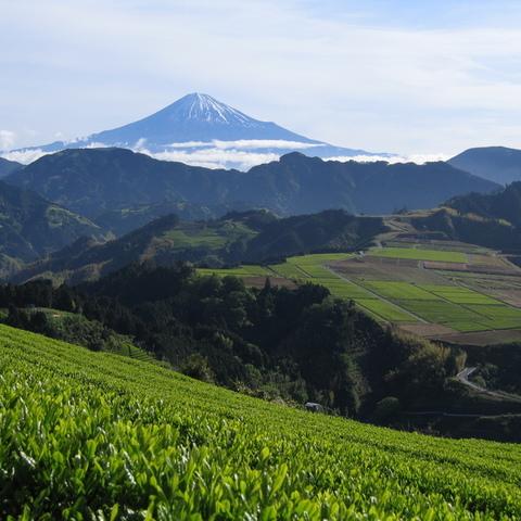八十八夜の頃 (富士山ビューポイント)のサムネイル