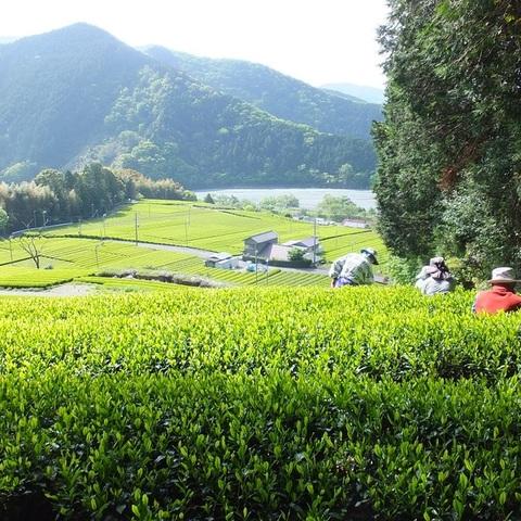 お茶の清水園・萩下製茶のサムネイル