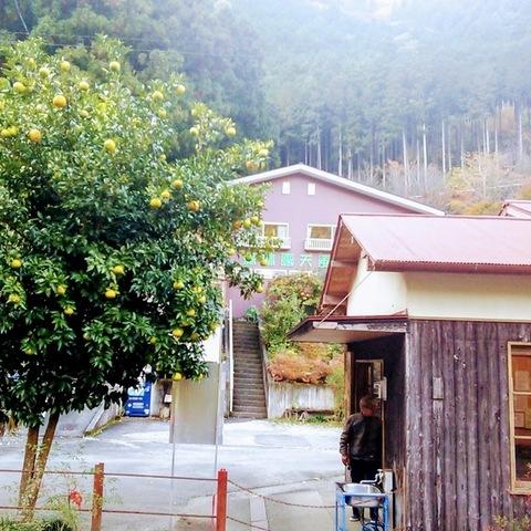 森林露天風呂(しんりんろてんぶろ)のサムネイル